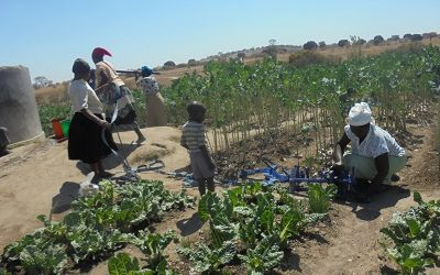 Smallholder farmers increase resilience to climate change